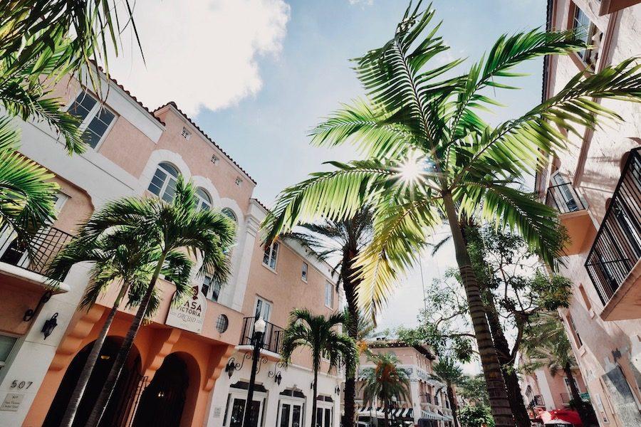 vvisiter-miami-beach-palmier